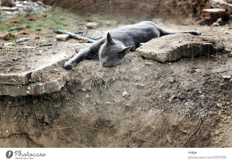 Cat Relaxation Calm Animal Emotions Gray Brown Lie Earth Sleep Ground Construction site Serene Fatigue Pet Domestic cat