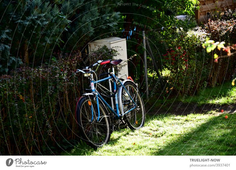 Two bicycles, nestled so close together that they could be mistaken for one, stand next to the grey electricity box, leaning against the garden hedge that lies in the dark; the morning sun illuminates the blue men's bike and the lawn.