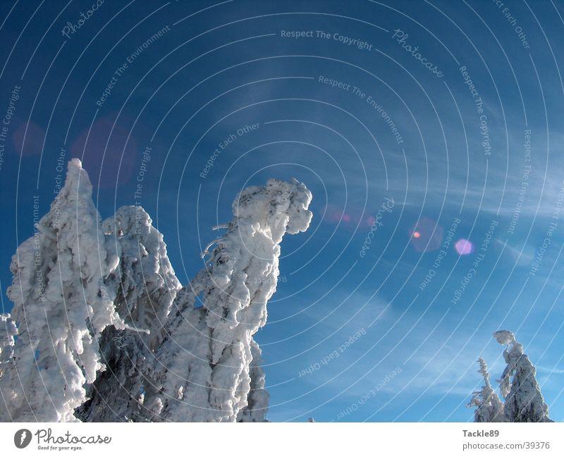 Tree Winter Snow Mountain Fir tree Snowscape Harz