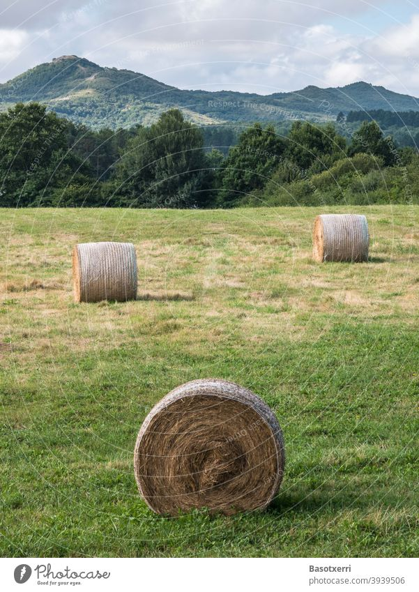Round bales of straw in a meadow in a hilly landscape. Álava Province, Basque Country, Spain Straw Hay Bale of straw round bales Field Harvest Landscape