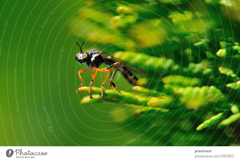 Nature Green Red Animal Black Environment Eyes Eroticism Small Legs Wild animal Fly Bushes Observe Curiosity Insect