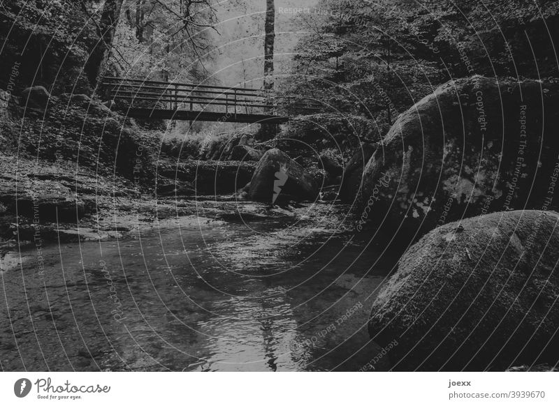 Bridge over small stream with rocks in forest, monochrome somber silent Calm Nature Forest Exterior shot Brook Water Deserted Landscape Day Rock stones Tree