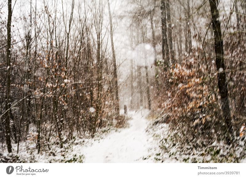 Snowfall during winter walk in the forest snowflakes Winter off To go for a walk Forest trees Nature foliage Cold Weather Exterior shot Environment Winter's day