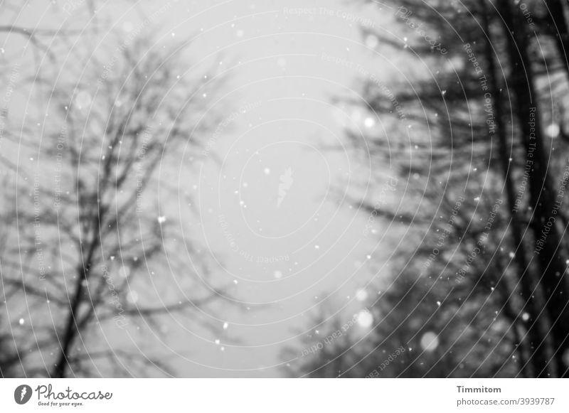 Winter gloom trees Bleak Black White Black & white photo Deserted Cold Exterior shot snowflakes Snowfall Sky Gray