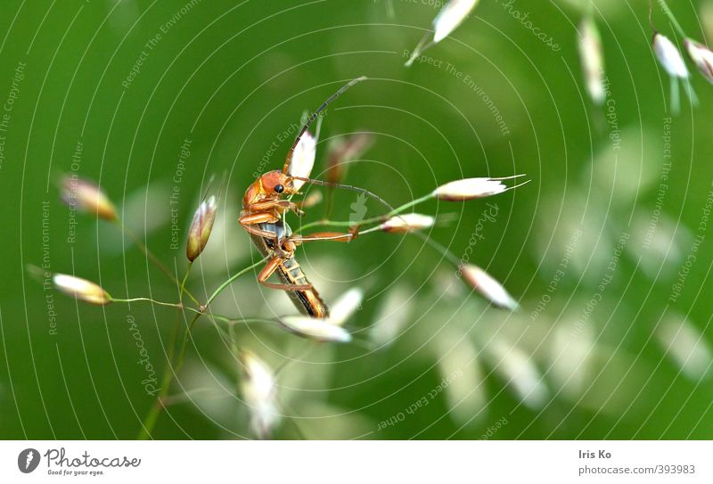 minor artist Nature Animal Summer Beautiful weather Grass Beetle 1 To hold on Hang To swing Athletic Exceptional Funny Green Orange Flexible Endurance