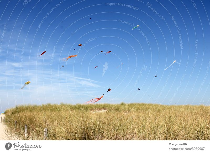 Kite flying on the beach under a blue sky Beach Blue sky sunshine kites climb the kite Vacation mood Landscape recreational activities Vacation & Travel