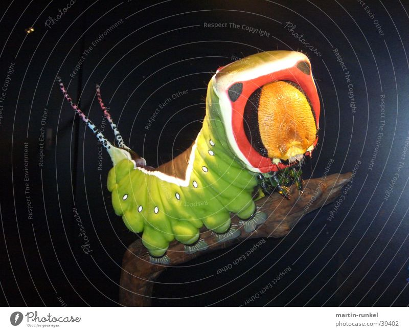 Nature Animal Exotic Caterpillar