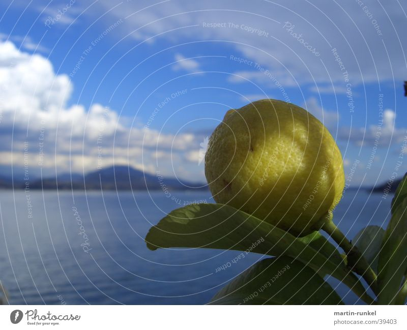 Nature Blue Water White Green Ocean Leaf Clouds Calm Relaxation Far-off places Yellow Mountain Horizon Fruit Large