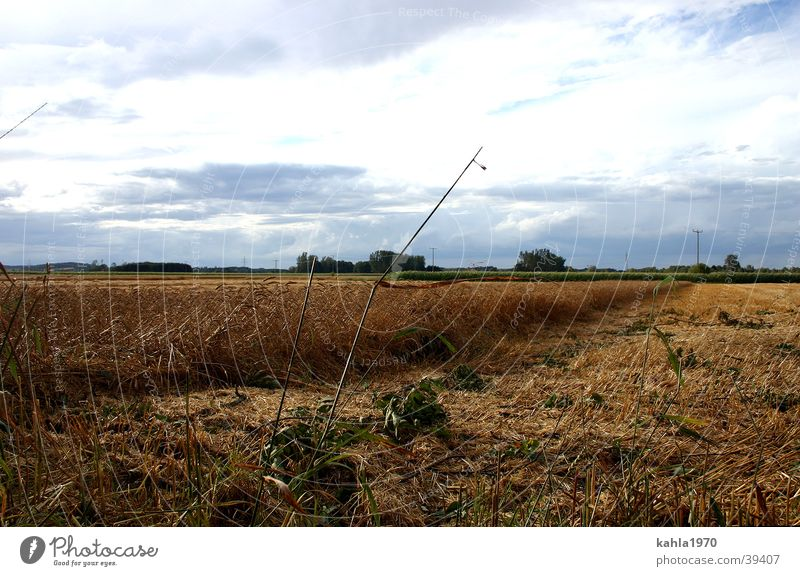 Golden Autumn Clouds Cornfield Autumnal Grain Blue