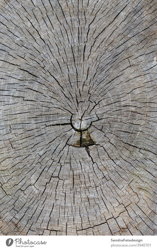 Close up of a wooden disc with annual rings age aged background close up detail close up nature cracked decoration forest natural old split texture tree wild