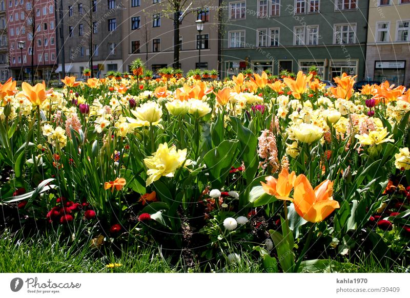 Flower Green City Yellow Spring
