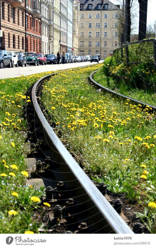 Flower Green City Meadow Spring Transport Railroad tracks