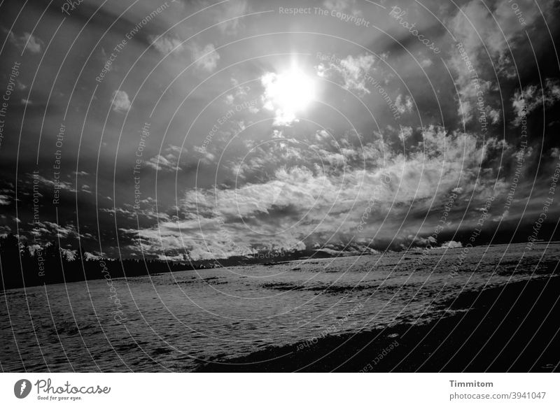 What the hell...? Snow Sky Sun Clouds Flashy Meadow Winter Black Forest Contrast Black & white photo Cold Tree Sunbeam