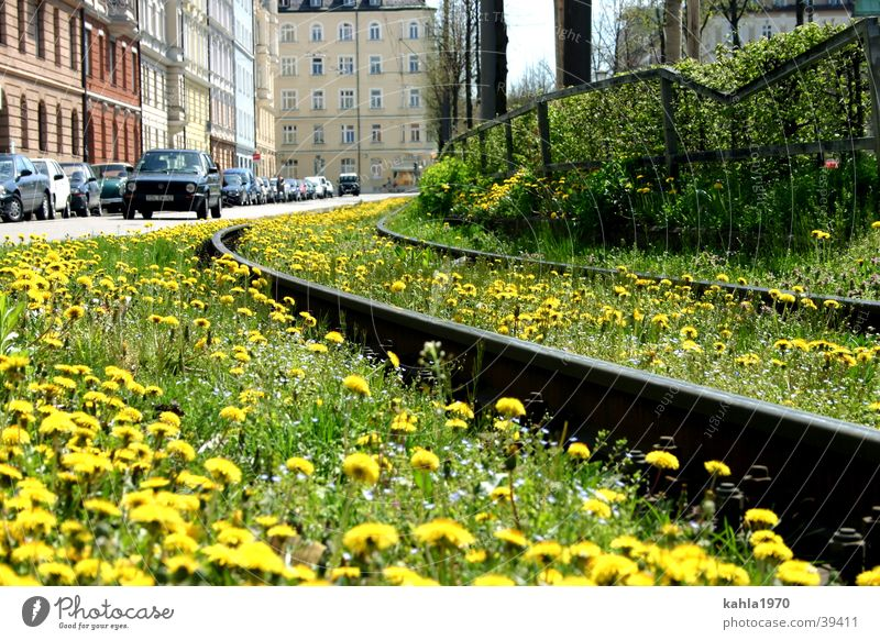 Flower Green Meadow Spring Transport Railroad tracks