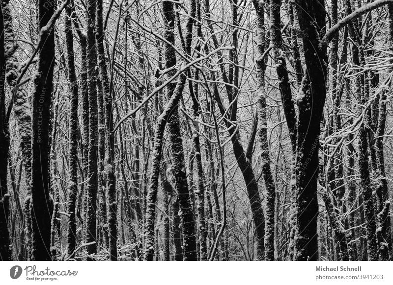 Trees after a snowfall trees Forest Nature Landscape Exterior shot Deserted Calm Winter Winter forest winter weather Snow Cold Winter mood Winter's day