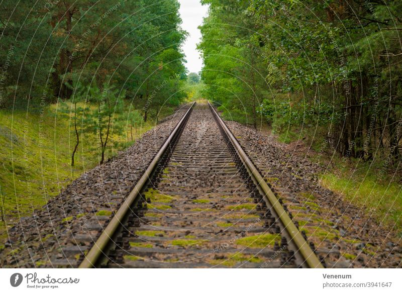 old railway track,at the end of the routes completely grown with trees , selective sharpness Track track bed rails railroad iron rust railway sleepers Forest