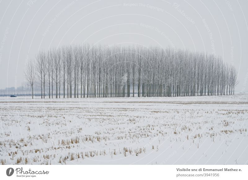 winter landscape ice snow calm nature plant cold white dusk blue skies tourist attraction grandeur earth hokkaido larch sky populus daytime shadow wood sunny
