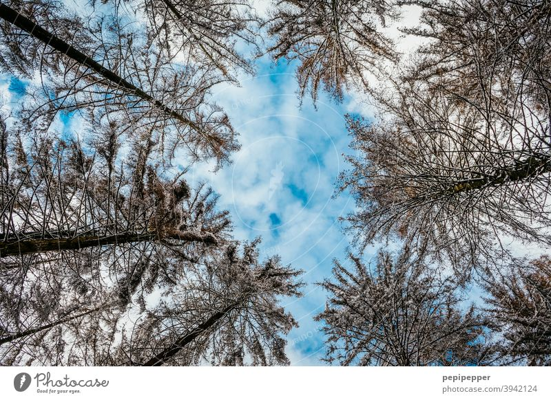 Trees photographed from frog perspective trees Worm's-eye view Nature Forest Exterior shot Environment Deserted Colour photo Day Tree trunk Sky