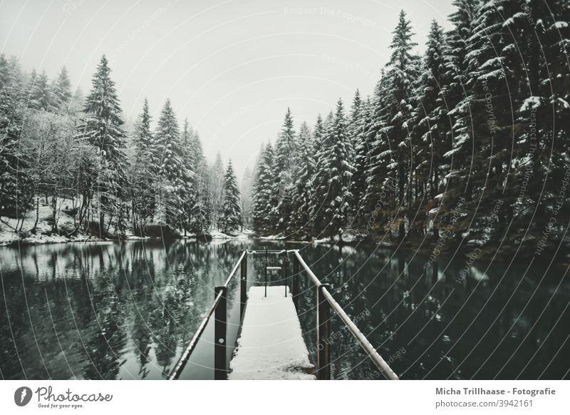 Waldsee in winter dress Pfanntalsteich oberhof Thuringia Thueringer Wald Lake Water Winter Snow Footbridge trees Forest rail Reflections Nature Landscape Idyll