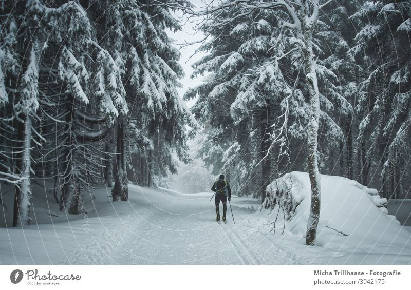 Skiing in the snowy forest Thuringia Thueringer Wald Rennsteig Snow Winter Winter sports cross-country skiing Cross country skiing Cross-country ski trail Frost
