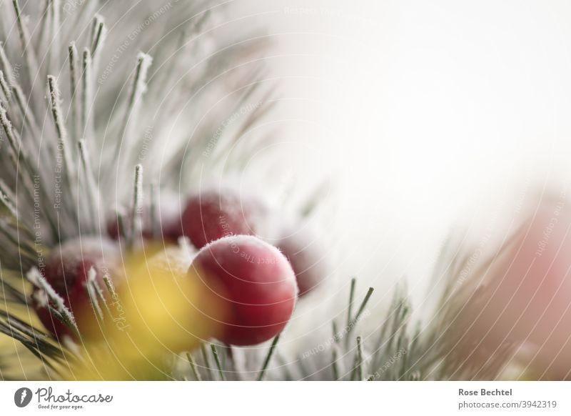 Red berries on the branch of a needle Winter red berries conifer branch Berries Fruit Close-up Nature Cold Ice Frost Colour photo Detail Copy Space Deserted