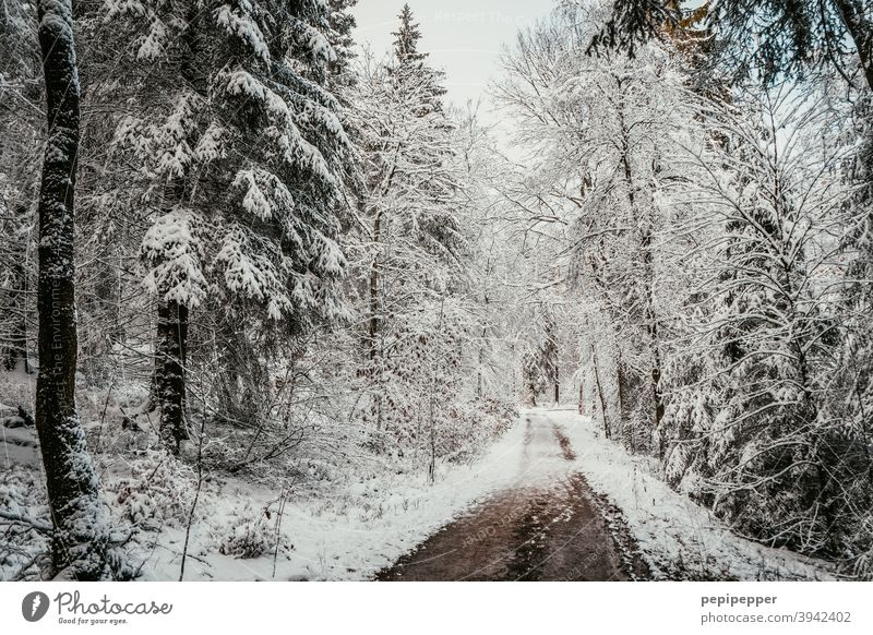 Forest path in winter with snow on the trees Winter Snow Tree Cold Ice Frost Nature Exterior shot Deserted Loneliness Clearing Woodground Forest walk