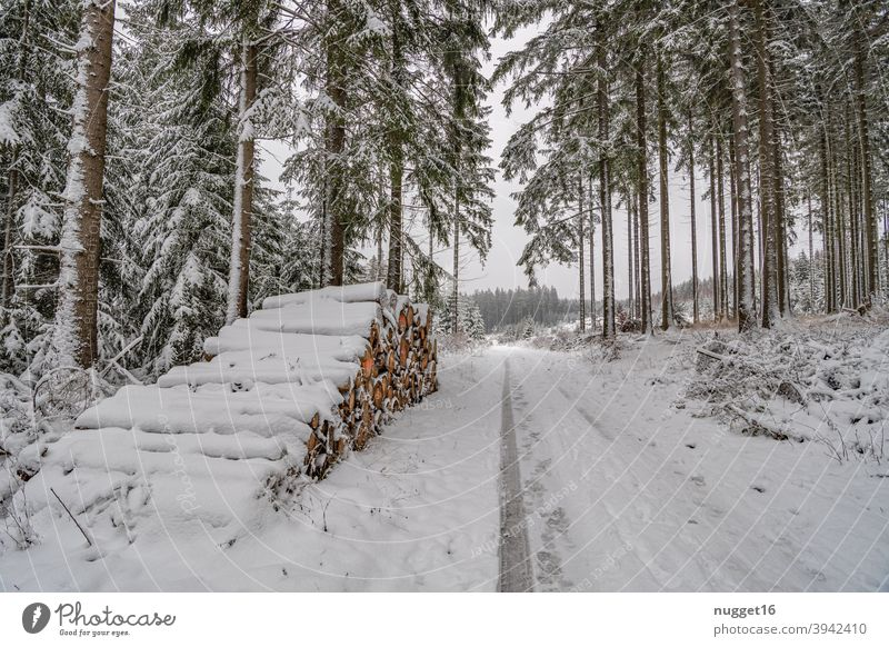 snow-covered path in the Thuringian Forest 3 forest path Nature Exterior shot Tree Colour photo Day Deserted Landscape Environment Plant naturally Winter Snow