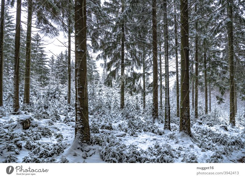Winter idyll in the Thuringian Forest Nature Exterior shot Tree Colour photo Day Deserted Landscape Environment Plant naturally Snow forest Forest road Cold