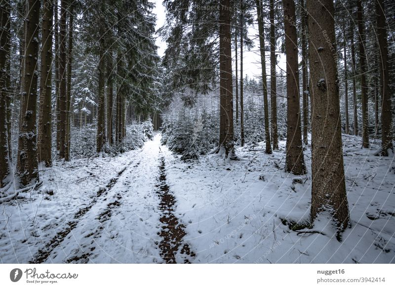 snow-covered path in the Thuringian Forest 2 forest path Nature Exterior shot Tree Colour photo Day Deserted Landscape Environment Plant naturally Winter Snow
