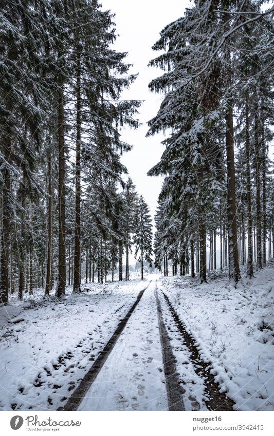 snow covered path in the Thuringian Forest forest path Nature Exterior shot Tree Colour photo Day Deserted Landscape Environment Plant naturally Winter Snow