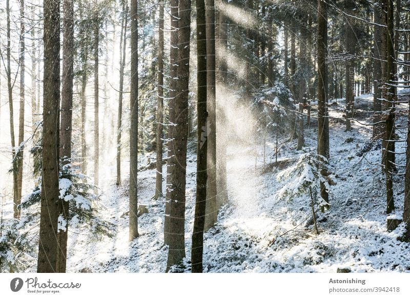 Light in the snowy forest Forest Snow Winter Shadow Contrast trees White Ground snowflakes rays Cold Nature Exterior shot Deserted Tree Environment Landscape