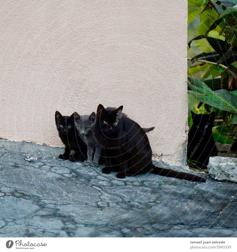 beautiful black and grey cats on the street gray pet kitty kitten feline stray cat domestic whiskers portrait animal head eyes ears hair nature cute beauty