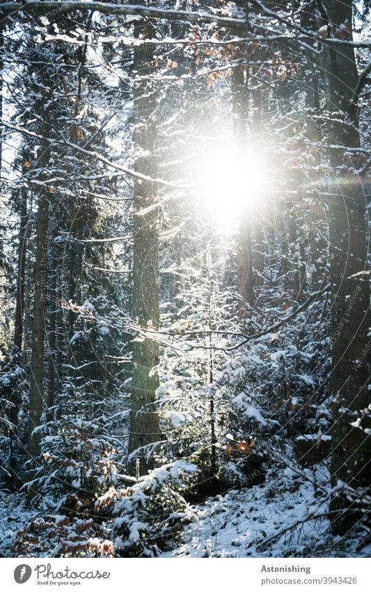 Light in the winter forest Winter forest Landscape Nature Snow White trees Forest Weather snowflakes fir tree tree trunks bark Cold Tree Exterior shot Frost