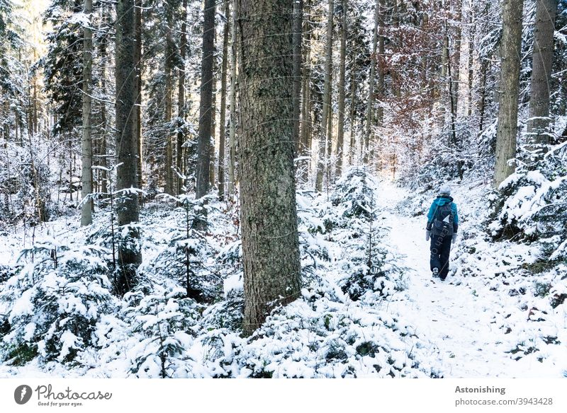 Walking in the winter forest Forest Winter Winter forest To go for a walk Hiking Going Woman Nature Landscape Snow White Tree trunk bark trees Weather Cold