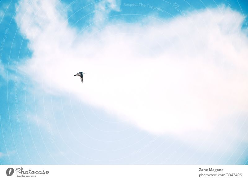 A lone bird flying on blue cloudy sky background minimal minimal bird minimal sky bird on sky lonely a lone bird single bird dreaming minimalistic clouds