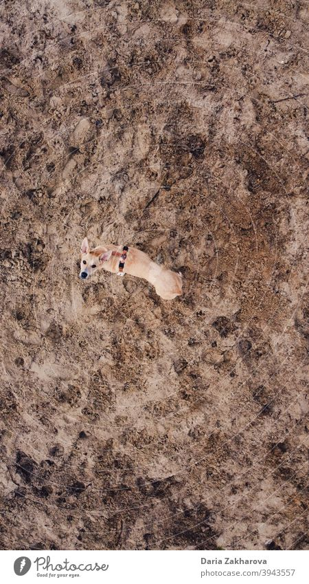 Dog on Mars dog pet sand walking a dog mars space from space sending to mars To go for a walk Drone drone view animal Exterior shot Nature Walking Walk the dog