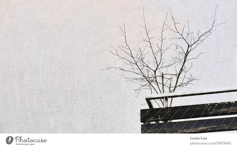 Suburban tristesse or a cut balcony with bare branches, in the middle of winter Balcony Town Bleak Old Gloomy dreariness house wall Plaster rail Balcony plant