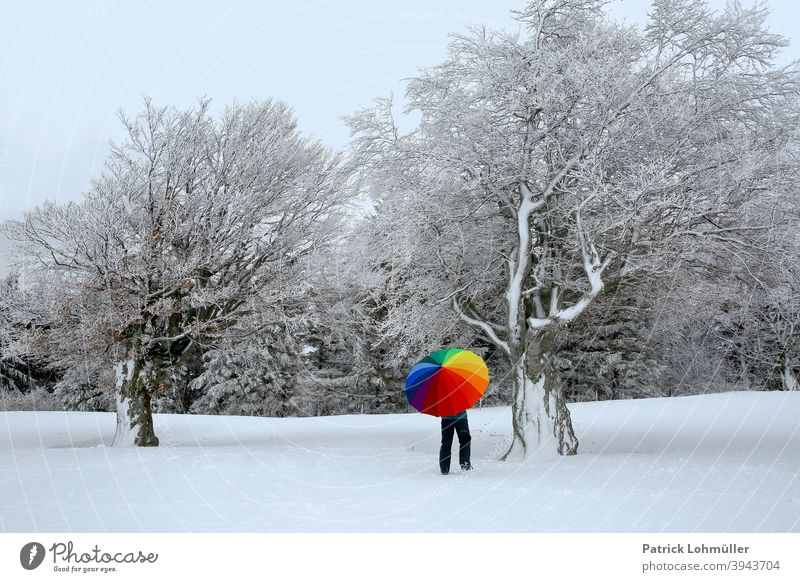 Winter coating Snow Umbrella white-cold Woman beech snow-covered Season icily variegated colourless colourful Rainbow Winter walk Art Bleak Nature Landscape