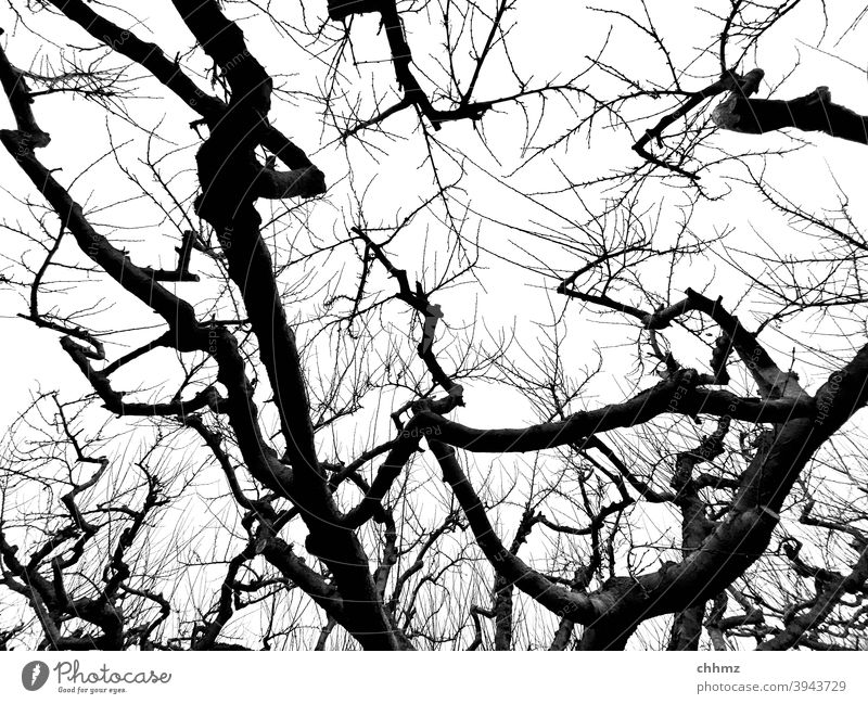 apple Apple tree Twigs and branches silouhette Worm's-eye view Fruit trees trunk Refuse Tree Nature Exterior shot Plant Sky Autumn Winter pruning muddled