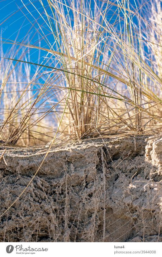 Dune at the Baltic Sea duene Grass Marram grass coast Protection coastal protection Plant Root Beach Sand sand dune Beach dune Nature Rügen Island nobody Sky