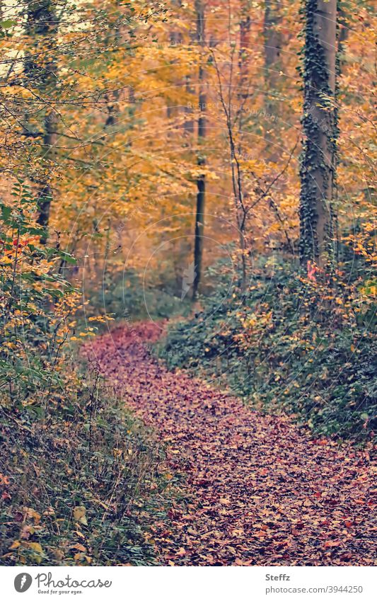 autumnal memory Automn wood forest path Forest Autumnal Footpath Autumn leaves Deserted Sense of Autumn Warm colour blurriness Nature Colour photo