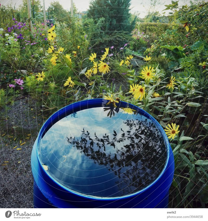 storage medium Garden Bushes Flower Foliage plant Idyll ton Water Containers and vessels Waterbutt Keg Colour photo Detail Sunlight Long shot Shadow