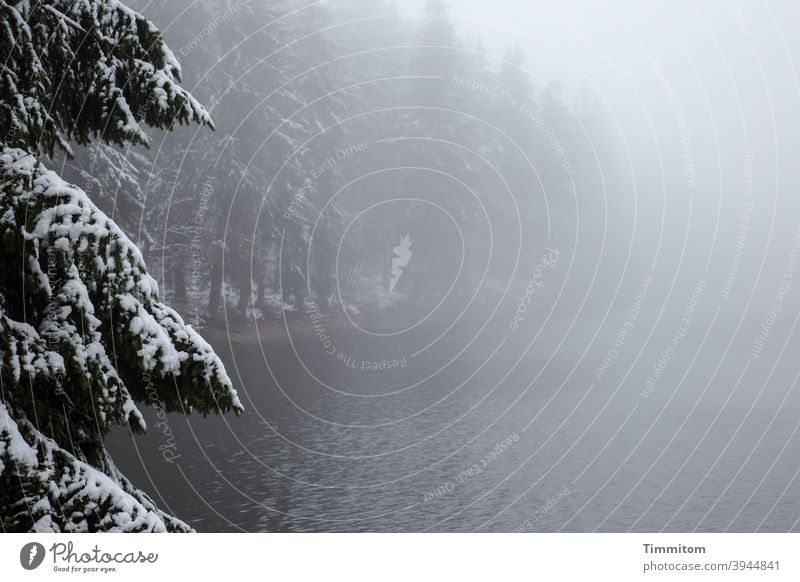 A defensible spruce watches over the wintry lake Lake Fog Winter Spruce Forest Mummelsee Lake Snow Nature Cold Deserted Colour photo