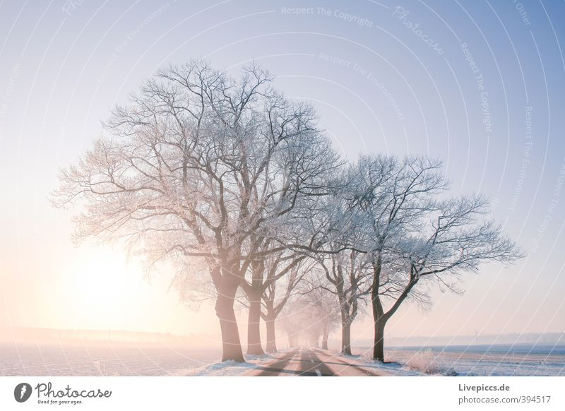 Road to Priborn Environment Nature Landscape Plant Sky Cloudless sky Sun Sunrise Sunset Sunlight Winter Beautiful weather Fog Ice Frost Snow Tree