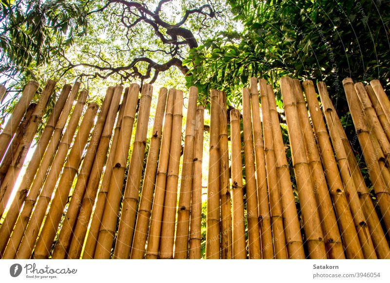 Texture of natural felling wall decorating from bamboo yellow brown tree panel color design light material wood wooden carpentry closeup nature background