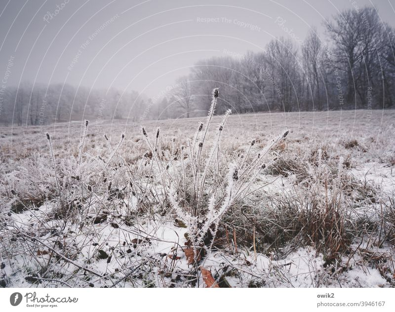 Winter clothes Landscape Bushes ice crystals Freeze Pattern Bizarre Day Sky Fog Structures and shapes Nature Subdued colour Plant Shallow depth of field