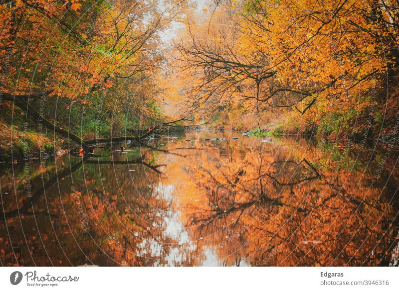 Autumn colors and reflection on the water fall Autumnal colours Autumn leaves Exterior shot Autumnal weather Early fall Autumnal landscape Leaf Colour photo