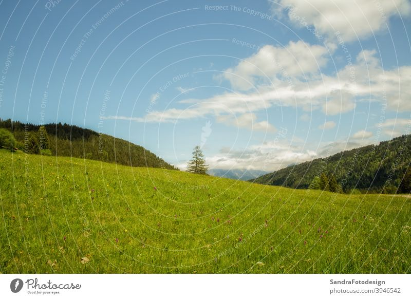 A green meadow, forest and blue sky background blooming environment europe flora flower grass hiking holiday landscape natural nature outdoor outdoors park