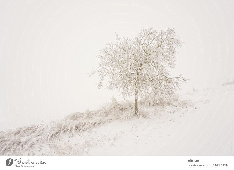 Fog lies over the snowy tree at the wayside / Snow / Cold Tree Country road silent foggy Rural Lanes & trails Winter Frost Moody Nature Ice Landscape White