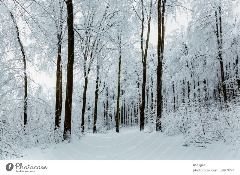 A deep snowy winter forest Winter Snow Ice Tree Landscape Frost Cold Deciduous tree Long shot Exterior shot Deserted Subdued colour Colour photo Freeze